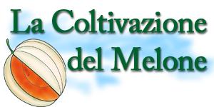 Meloni produzioni agricole di alta qualit con tecniche for Melone coltivazione